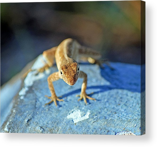 Anole Acrylic Print featuring the photograph Mini Attitude by Kenneth Albin