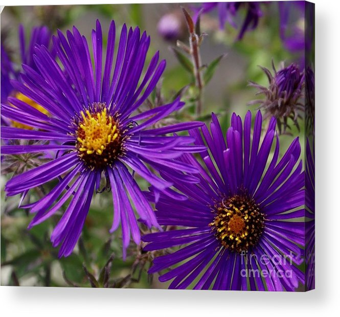 Plant Acrylic Print featuring the painting My Purple Ways by Debbie May