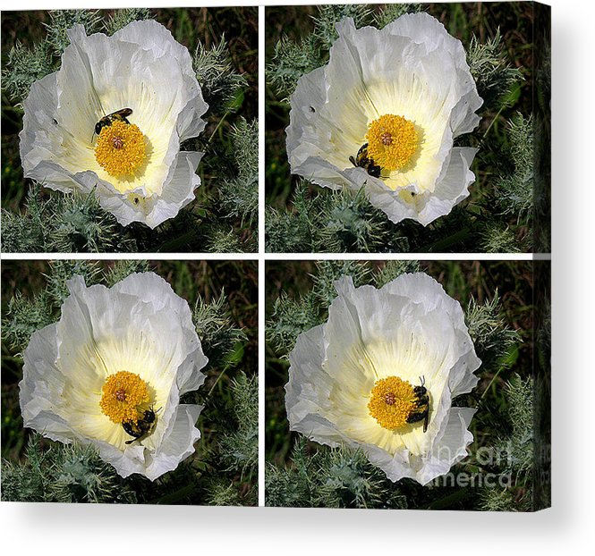 Nature Acrylic Print featuring the photograph Nature In The Wild - The Journey by Lucyna A M Green