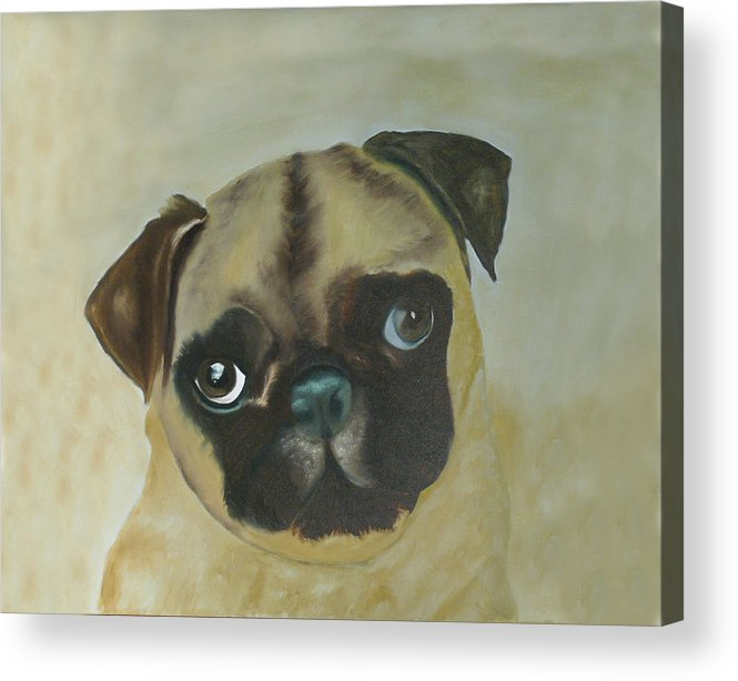 Acrylic Print featuring the painting Pug by Dick Larsen