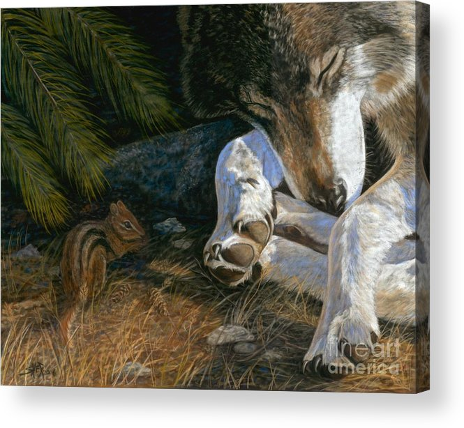 Wolf Acrylic Print featuring the painting Risky Business by Sheri Gordon