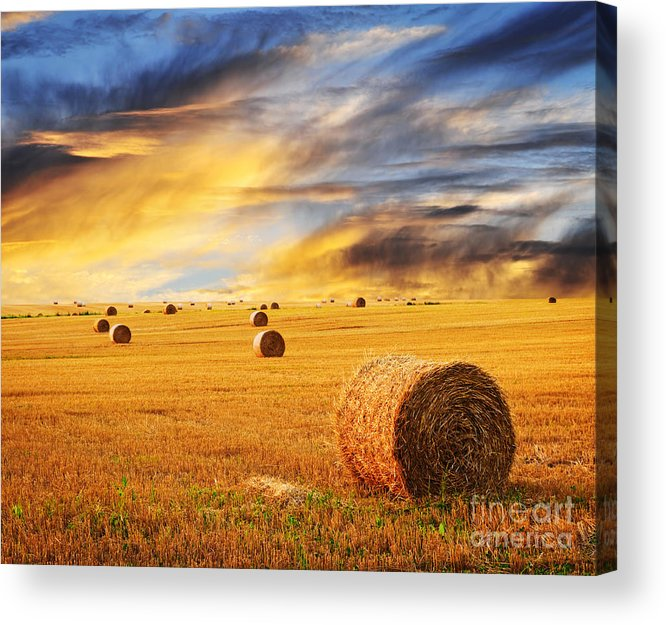 Farm Acrylic Print featuring the photograph Golden Sunset Over Farm Field With Hay Bales by Elena Elisseeva