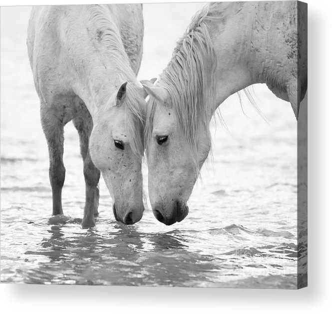 Black And White Acrylic Print featuring the photograph In The Water At Dawn II by Carol Walker