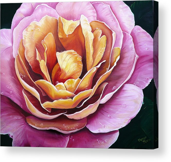 Rose Painting Pink Yellow Floral Painting Flower Bloom Botanical Painting Botanical Painting Acrylic Print featuring the painting Rosy Dew by Karin Dawn Kelshall- Best