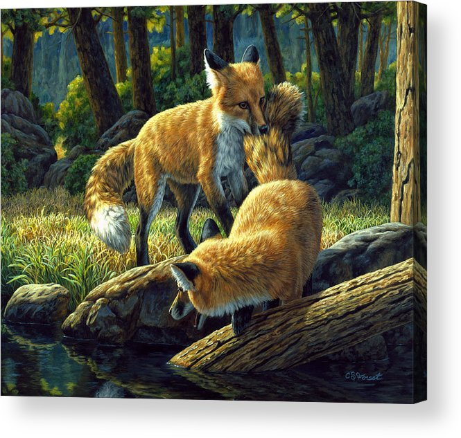 Fox Acrylic Print featuring the painting Red Foxes - Sibling Rivalry by Crista Forest
