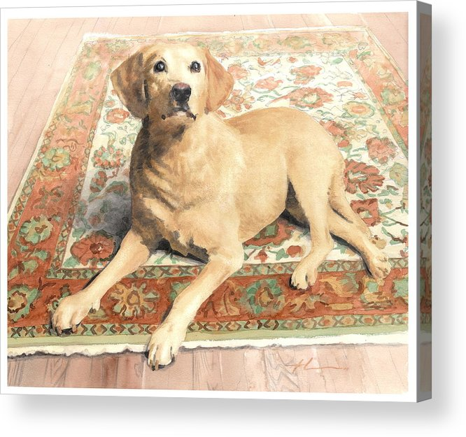 Miketheuer.com Yellow Lab On A Rug Watercolor Portrait Acrylic Print featuring the drawing Yellow Lab On A Rug Watercolor Portrait by Mike Theuer