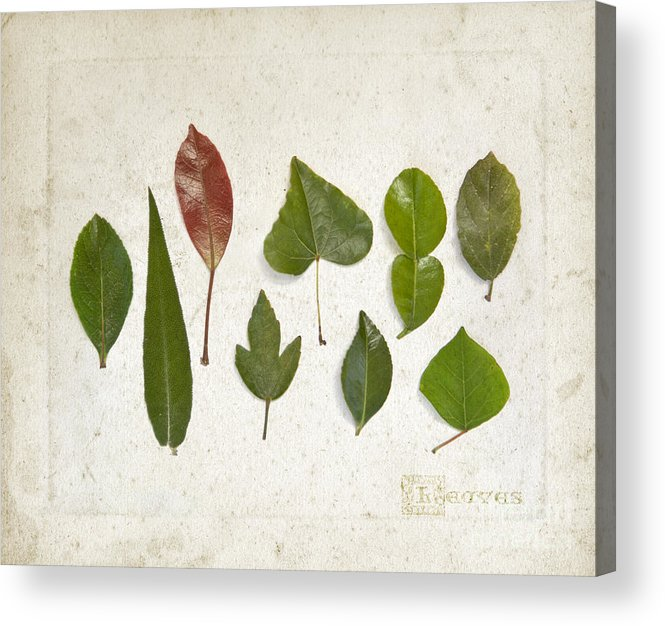 Leaves Acrylic Print featuring the photograph 9 Leaves by Linde Townsend