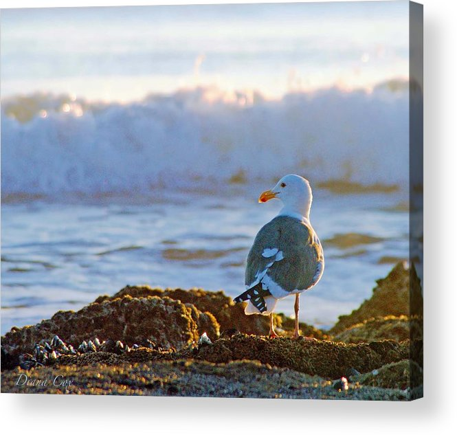 Beach Acrylic Print featuring the photograph The Sentinel by Diana Cox