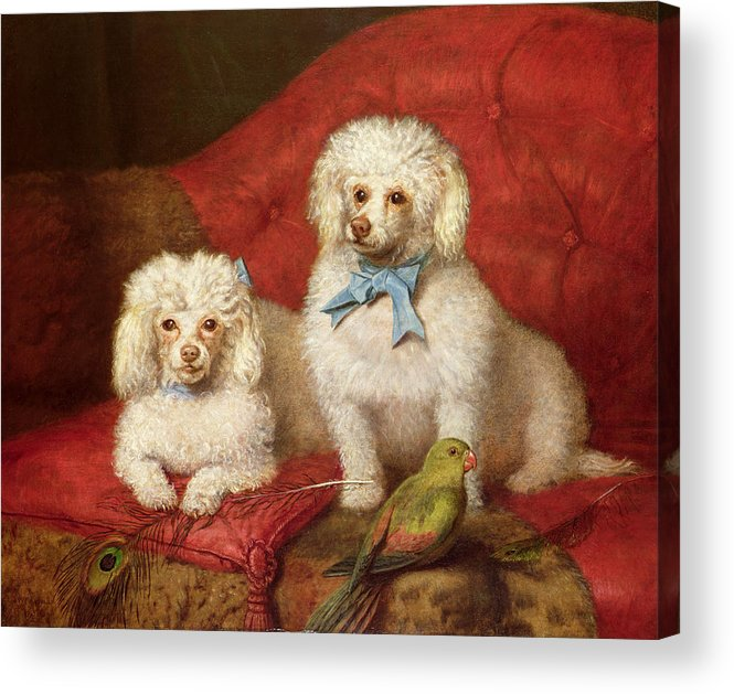 A Pair Of Poodles By English School (19th Century) Acrylic Print featuring the painting A Pair Of Poodles by English School