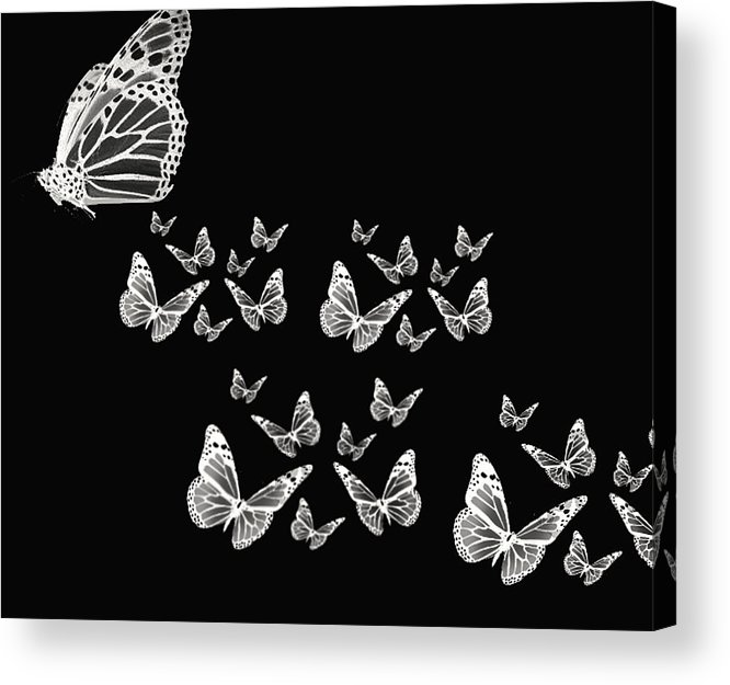 Butterfly Photographs Acrylic Print featuring the photograph Butterflies by Lourry Legarde