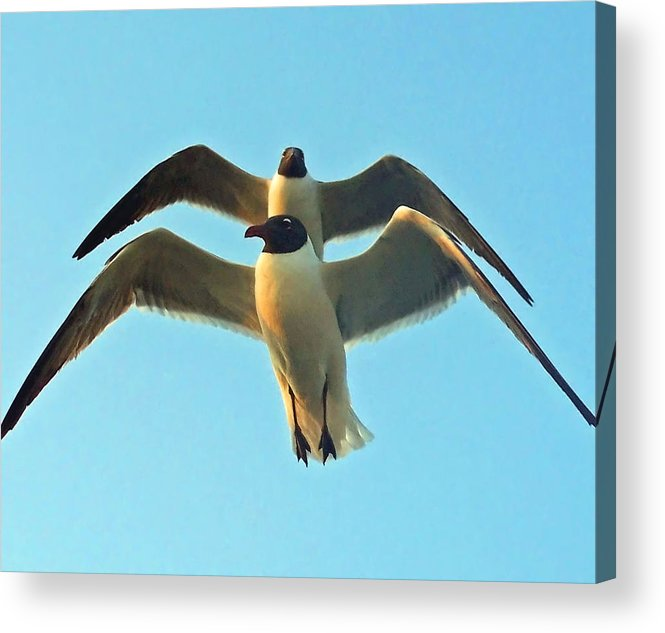 Seagulls Acrylic Print featuring the photograph In Tandem At Sunset by Sandi OReilly