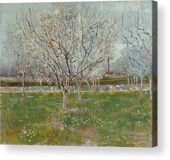 Nature Acrylic Print featuring the painting Orchard In Blossom Plum Trees by Artistic Panda