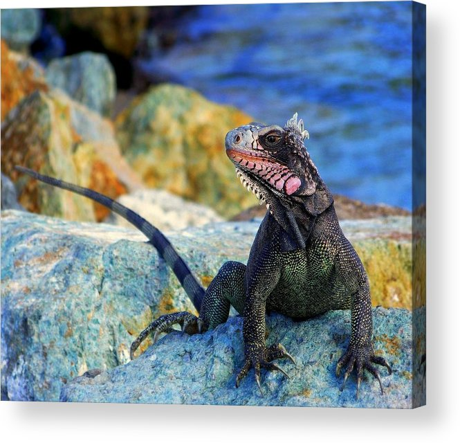 Iguana Acrylic Print featuring the photograph On The Prowl by Karen Wiles