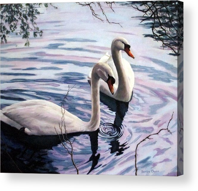 Swan Acrylic Print featuring the painting Two Swans A Swimming by Sandra Chase