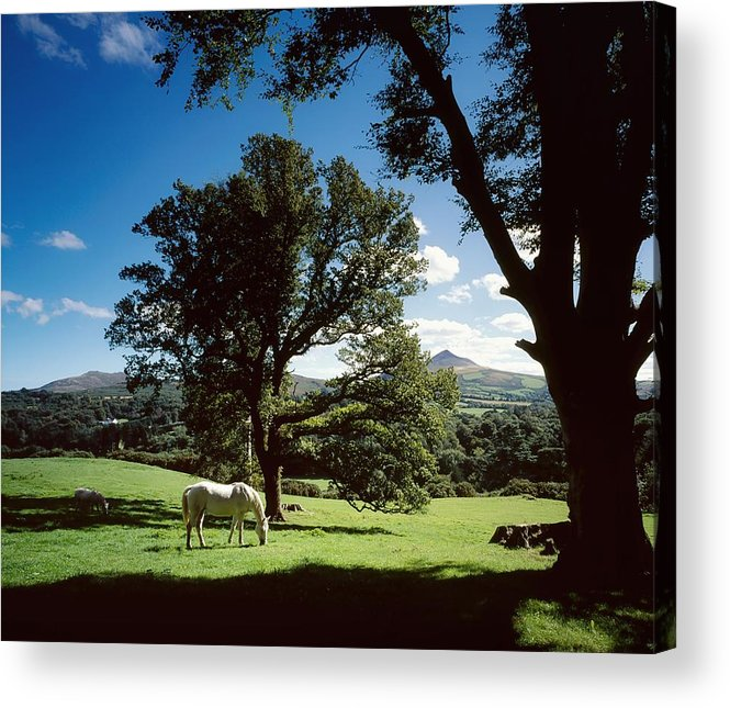 Enniskerry Acrylic Print featuring the photograph White Horse At Powerscourt, Co Wicklow by The Irish Image Collection