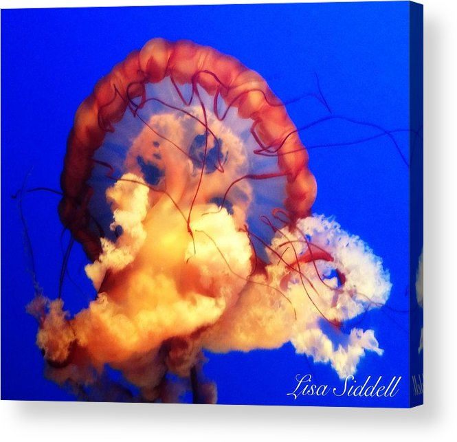 Ocean Acrylic Print featuring the photograph Depths by Lisa Siddell