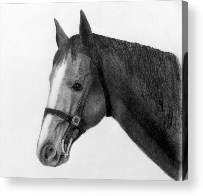 Horse Head In Pencil Acrylic Print featuring the drawing Jess by Susan Tilley