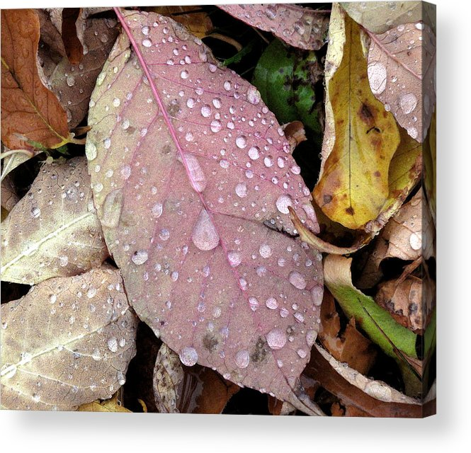 Water Drops Acrylic Print featuring the photograph Water Drops 2 by Lyle Crump