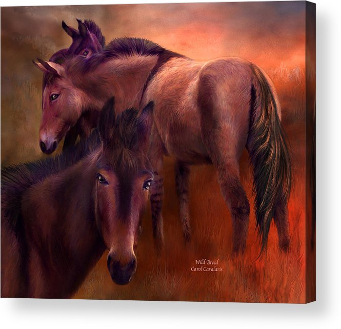 Horse Acrylic Print featuring the mixed media Wild Breed by Carol Cavalaris