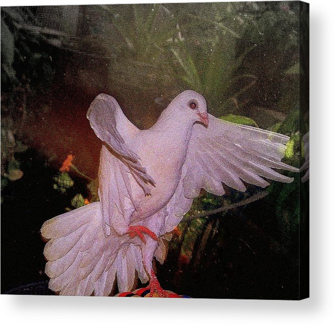 Dove Acrylic Print featuring the mixed media The Dance by YoMamaBird Rhonda