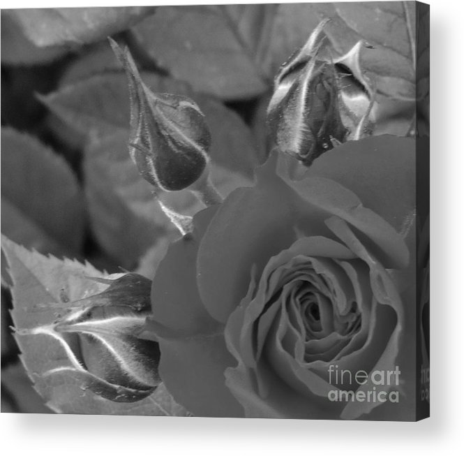 Flowers Acrylic Print featuring the photograph 3 On 1 by Johnny Booey