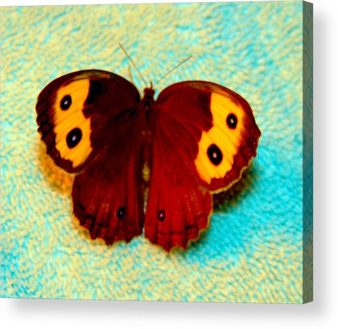 Butterfly Acrylic Print featuring the photograph Butterfly 1 by Stephanie Kendall