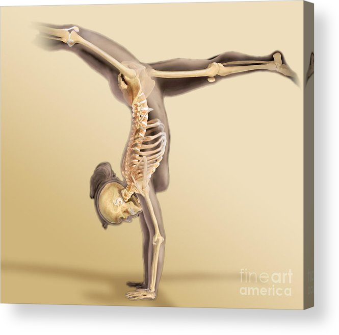 Body Scan Acrylic Print featuring the photograph Female Skeletal System by Anatomical Travelogue