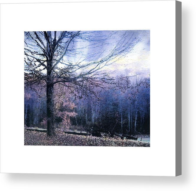 Tree Acrylic Print featuring the photograph The Blue Trees by Valerie Jagiello