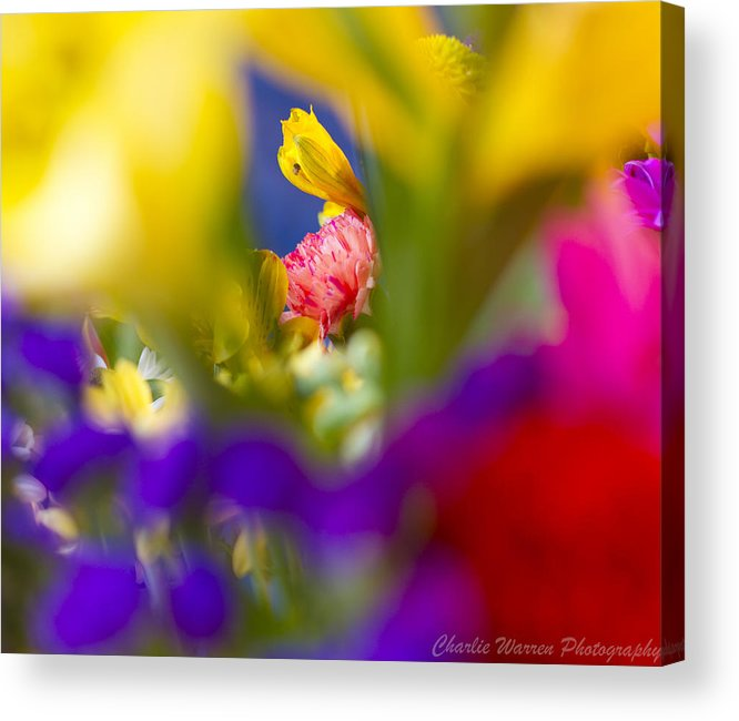 Blossom Acrylic Print featuring the photograph Framed by Charles Warren