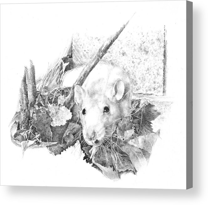 Rat Acrylic Print featuring the drawing Reggie The Rat by Judith Angell Meyer
