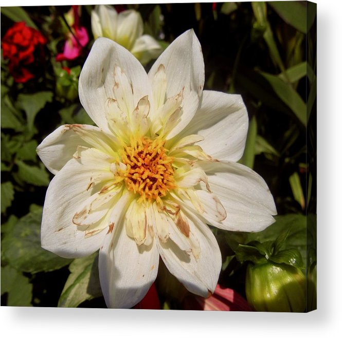 Flower Acrylic Print featuring the photograph White Flower by Stephanie Moore