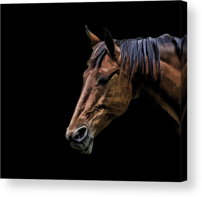 Horse Acrylic Print featuring the photograph Horsing Around by Gary Smith