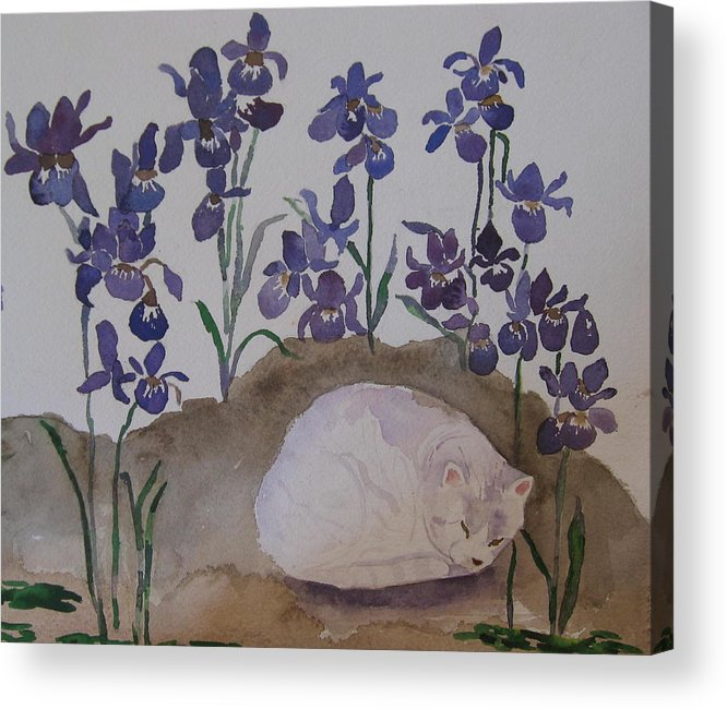 Cat Acrylic Print featuring the painting Iris Dreams by Anne McMath