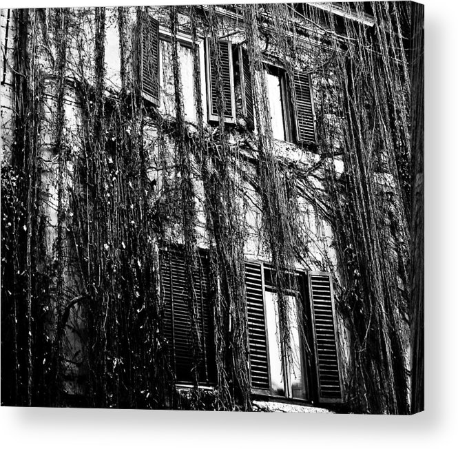Ivy Acrylic Print featuring the photograph Ivy Building by Paul Jarrett