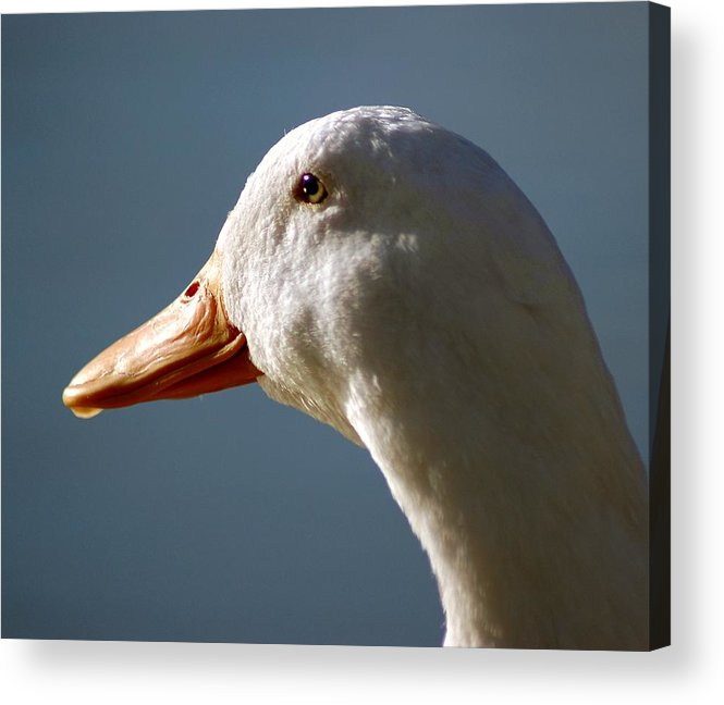 Animals Acrylic Print featuring the photograph Standing Proud by Lori Mellen-Pagliaro