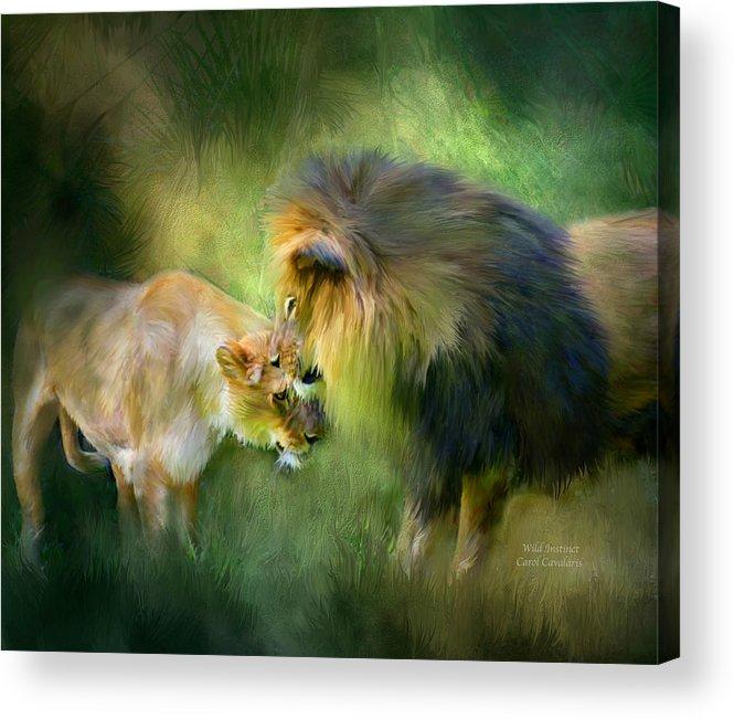 Lion Acrylic Print featuring the mixed media Wild Instinct by Carol Cavalaris