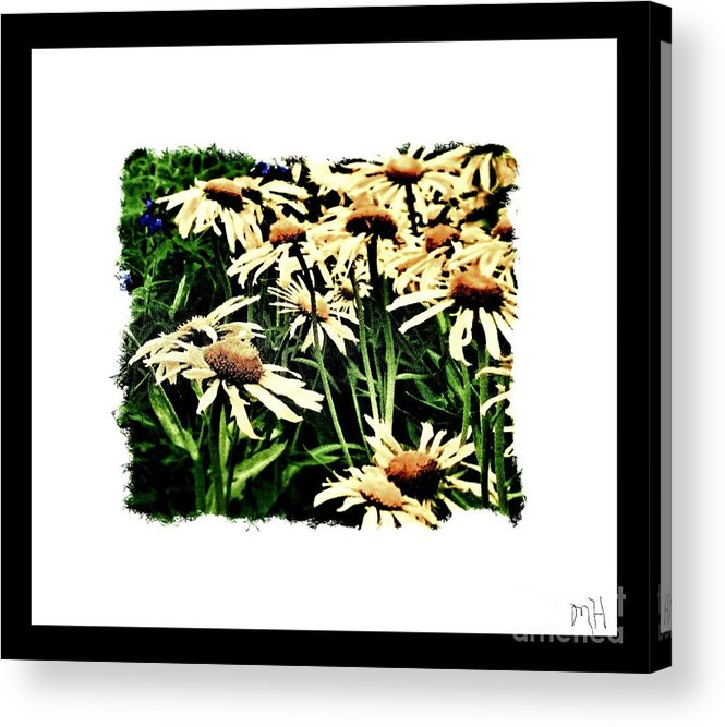 Photo Acrylic Print featuring the photograph Field Of Love by Marsha Heiken
