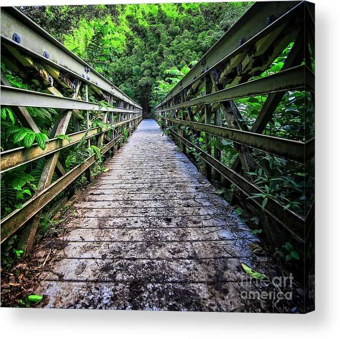 Bamboo Acrylic Print featuring the photograph Into The Jungle by Edward Fielding