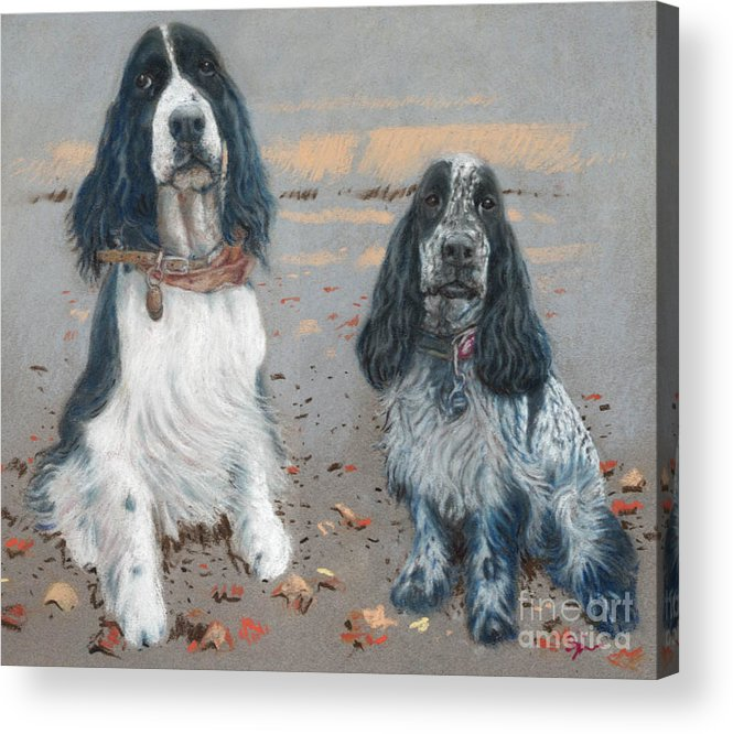 Dogs Acrylic Print featuring the pastel Cocker Spaniels by Suzie Majikol Maier