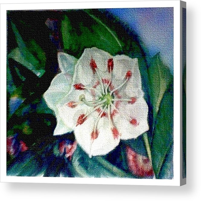 Art Acrylic Print featuring the painting Mountain Laurel Blossom Closeup by Elle Smith Fagan