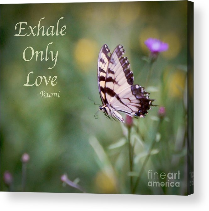 Butterfly Acrylic Print featuring the photograph Exhale Only Love by Kerri Farley