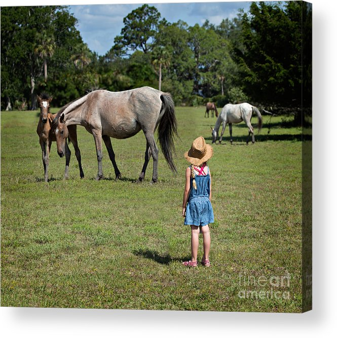 Wild Acrylic Print featuring the photograph Watching The Wild Horses by Louise Heusinkveld