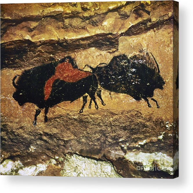 15000 Acrylic Print featuring the photograph Cave Art: Bison by Granger