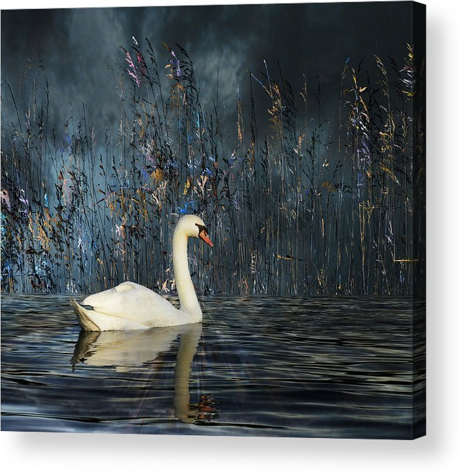Animal Acrylic Print featuring the photograph 2805 by Peter Holme III