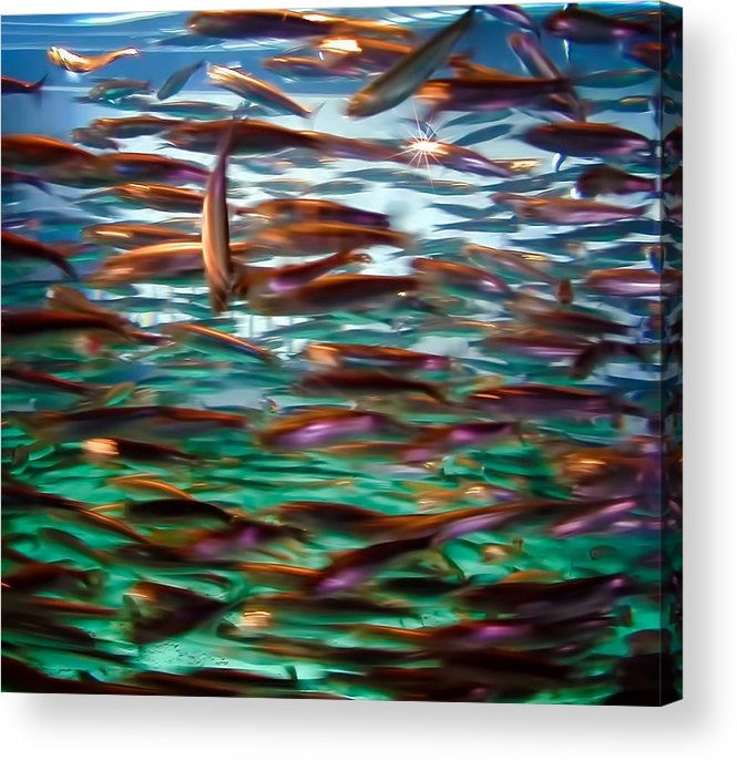 Fish Acrylic Print featuring the photograph Fish 1 by Dawn Eshelman