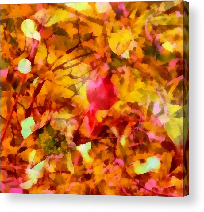 Rick Todaro Artwork Acrylic Print featuring the photograph Pomegranate by Rick Todaro