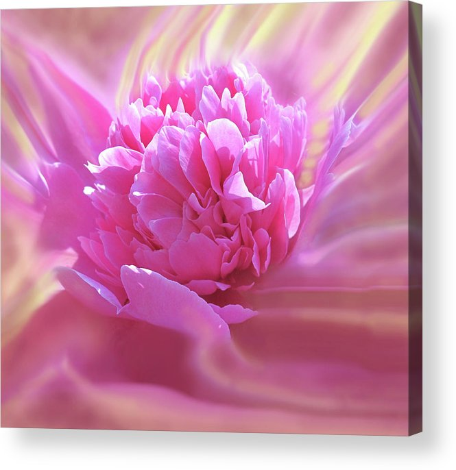 Peony Acrylic Print featuring the digital art Smooth Pink by Ian MacDonald