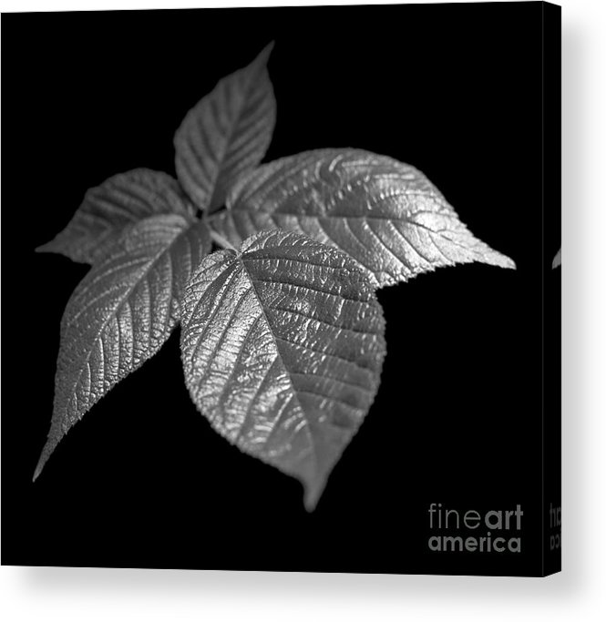 Plant Acrylic Print featuring the photograph Leaves by Tony Cordoza