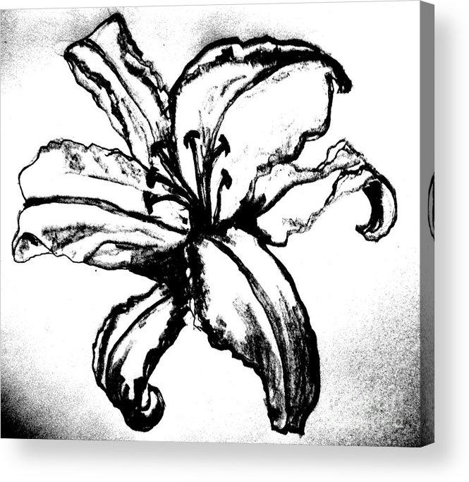 Drawing Acrylic Print featuring the digital art Tigerlily by Marsha Heiken