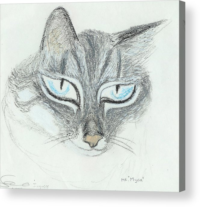 Cat Acrylic Print featuring the drawing All Eyes by Ingrid Szabo